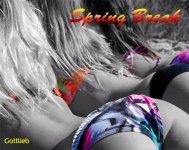 spring3title.jpg
